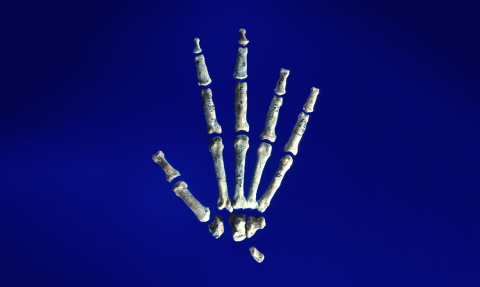 High resolution scan on Lucy's hand on a blue background