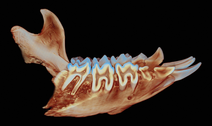 GIS scanning methods are applied to learn more about gorrila teeth errosion patters